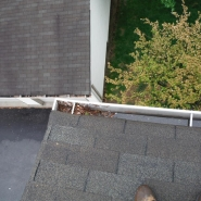 GUTTER CLEANING (2).JPG